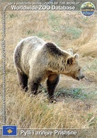 591 Pylli I Arinjve Prishtine, XK - Brown Bear (Ursus Arctos) - Kosovo
