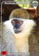594 Minizoo Sofra E Ariut, AL - Green Monkey (Chlorocebus Aethiops) - Albania