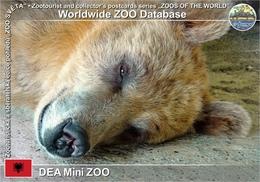 595 DEA Mini ZOO, AL - Brown Bear (Ursus Arctos) - Albania