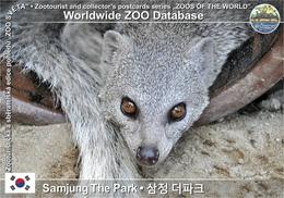 610 Samjung The Park, KR - White-tailed Mongoose (Ichneumia Albicauda) - Korea, South