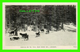 AGRICULTURE, ATTELAGES DE CHIEN - HUSKIES DOGS ON THE TRAIL NEAR BOOSE BAY, LABRADOR - PHOTO GELATINE ENGRAVING CO - - Attelages