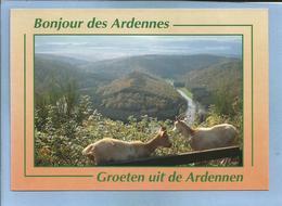 Botassart-sur-Semois (commune De Bouillon, Prov. De Luxembourg) 2 Scans Chèvres - Bouillon