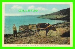 AGRICULTURE, ATTELAGES DE BOEUF - A HABITANT OX CART AT BELLE ANSE, QUÉBEC - G. P. -  H. V. HENDERSON - - Attelages