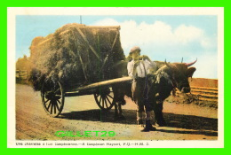 AGRICULTURE, ATTELAGES DE BOEUF - A GASPÉSIAN HAYCART, QUÉBEC - H. M. -  TRAVEL  IN 1953 - PECO - - Attelages