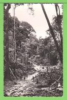 OUBANGUI-CHARI / R.C.A. CENTRAFRIQUE / LA FORET .....Carte Vierge / HOA GUI N° 146 - Centrafricaine (République)