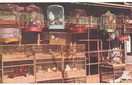 POSTAL   JAPON  - SMALL BIRD SHOP  ( TIENDA DE AVES PEQUEÑAS) - Japón