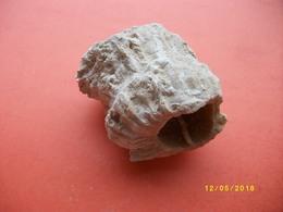 2 Fossiles - Minéraux