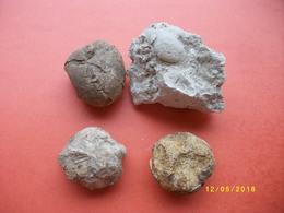 4 Fossiles - Minéraux