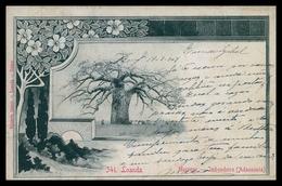 LUANDA - Muceque - Imbondeiro ( Andasonia) ( Ed. Eduardo Osório Nº 341 )  Carte Postale - Angola