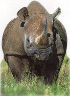 CPM Rhinoceros De Face (corps Découpé) - Rhinocéros