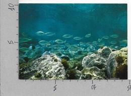 CARTOLINA NV ITALIA - PESCI - Panorama Subacqueo - ROTALFOTO 274 - 10 X 15 - Pesci E Crostacei