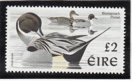 Ireland 1998-99 MNH Scott #1111 2pd Pintail - Birds - 1949-... République D'Irlande