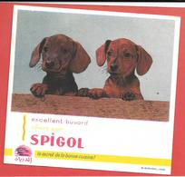 Buvard Années 50  SPIGOL -Epices  -2 Chiots Teckel  -Origine Afrique Du Nord De La Marque -logo Porc épic écriture Arabe - Food