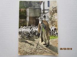 CP 84  Un Vieux Berger Provençal Et Ses Moutons - éditions Photo D'art De Provence CARPENTRAS  346 - Carpentras