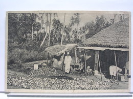 TANZANIE - DRYING COPRA, ZANZIBAR - ANIMEE - Tanzanie