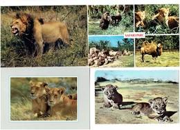 Lot 4 Cpm - LION LIONNE Safari Parc PEAUGRES Singe Lionceau Chameau Zèbre Faune Africaine Tanzania Erengeti Park - Lions
