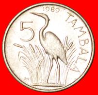 # BANDA (1898-1997): MALAWI ★ 5 TAMBALA 1989 MINT LUSTER! LOW START ★  NO RESERVE! - Malawi