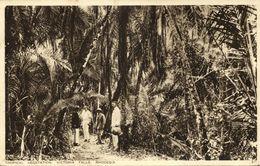 Rhodesia, VICTORIA FALLS, Tropical Vegetation (1936) Empire Exhibition Postcard - Zimbabwe