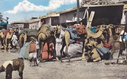 ASIE,ASIA,YEMEN,ADEN,ADAN ,EX SOMALIE BRITANNIQUE,SOMALILAND,PO RT,SITE  VOLCANIQUE,CAMELS,CHAMEAU ,CARAVANE,PORT,ELEVEU - Yémen