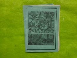 1 Cahier (petit Format) Vue D'une Fourmiliere-hachette Paris Imprimerie Cusset Paris (avec Lettre A L'interieur) - Blotters