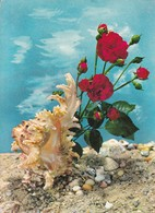 CARACOL MARINO SHELLS ROSES ROSAS. EDICOLOR. CIRCA 1970's.-BLEUP - Bloemen