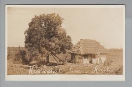 AK Karibik Haiti 1935-12-02 Port-au-Prince Foto Mangot Tree - Cartes Postales