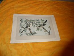 GRANDE IMAGE ILLUSTREE DE P. MAHLER. / DATE ?. / OISEAUX A IDENTIFIER. - Vieux Papiers