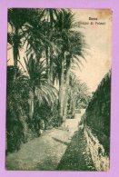Derna - Gruppo Di Palmeti - Libya