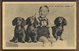 NL.- Let Op, Er Komt Een Vogeltje Uit ! Jongen Met 3 Honden. Stempel: - NEDERLANDS VOLKSHERSTEL - 1946 -. - Humor