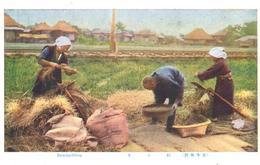 POSTAL   JAPON  - RICE HACKLING (TRABAJANDO EL ARROZ) - Japón