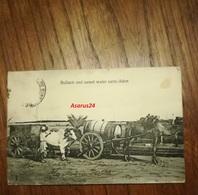 CPA Photo Rare 1909 Asie - Yemen, Aden - Bullock And Camel Warter Cart - Métier Ancien - Boeufs, Chameau, Bon état - Yémen