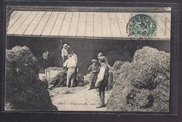 CPA 50 - PIROU - Préparation Du Varech - SUPERBE PLAN ANIMATION INDUSTRIE De La MER CP Voyagée 1907 Oblitération - Autres Communes