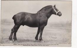 CUZY  QUEBEC Etalon Cheval Prix Honneur A PARIS 1925 - France