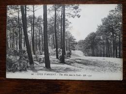 L3/87 Arcachon.Côte D'Argent. Une Allée Dans La Forêt - Arcachon