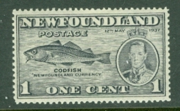 Newfoundland: 1937   Coronation Issue  SG257d   1c  [Perf: 13½]   MH - Newfoundland