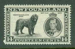 Newfoundland: 1937   Coronation Issue  SG262b   14c  [Perf: 13½]   MH - Newfoundland