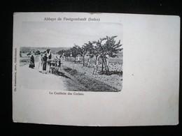 ABBAYE DE FONTGOMBAULT LA CUEILLETTE DES CERISES - France