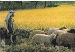 BETHLEHEM. SHEPHERD'S FIELD. STAR CARDS. CIRCA 1980. ISRAEL.-BLEUP - Israël