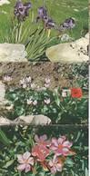 FLOWERS OF ISRAEL. 7 POSTCARD. PALPHOT LTD. PHOTOSET SOUVENIR LAMBRANÇA GRUSS AUS. CIRCA 1980.-BLEUP - Bloemen