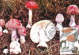 Carte Maximum Roumaine ( Amanites Tue Mouche ) - Champignons