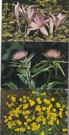 FLOWERS OF ISRAEL. 10 POSTCARD. PALPHOT LTD. PHOTOSET SOUVENIR LAMBRANÇA GRUSS AUS. CIRCA 1980.-BLEUP - Bloemen