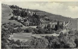 Jerusalem - Garden Of Gethsemane - Palestine