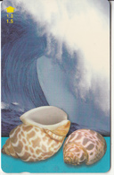 OMAN(GPT) - Seashells Of OMAN/Babylonia Spirata, CN : 52OMNF(normal 0), 04/01, Used - Oman