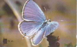 OMAN(GPT) - Butterfly, Mediterranean Pierrot, CN : 34OMNX/B(normal 0), Tirage 50000, Used - Oman