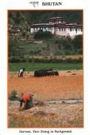 Harvest . Paro Dzong Im Hintergrund - Bhutan