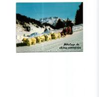 ATTELAGE DE CHIEN SAMOYEDES,BEAU PLAN,COULEUR REF 56302 - Cani