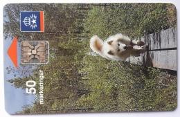 Animal ,Samojed Dog, Sweden - Sweden