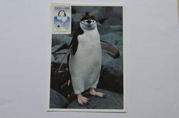 Chili Maximum Carte Pingouins Chile Pinguino - Penguins