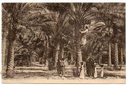 Bagda - Palm Picking - Iraq