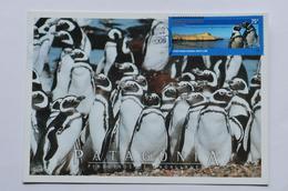 Argentine Carte Maximum Pingouins Argentina Antartida Pinguinos - Penguins
